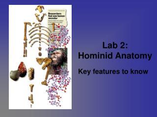 lab 2: hominid anatomy