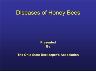 diseases of honey bees