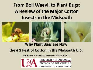 From Boll Weevil to Plant Bugs:  A Review of the Major Cotton Insects in the Midsouth