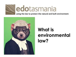What is  environmental  law?