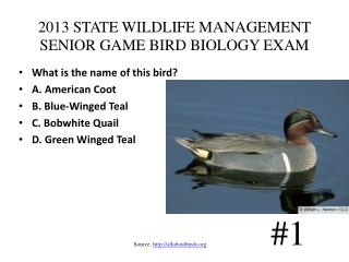 2013 STATE WILDLIFE MANAGEMENT SENIOR GAME BIRD BIOLOGY EXAM