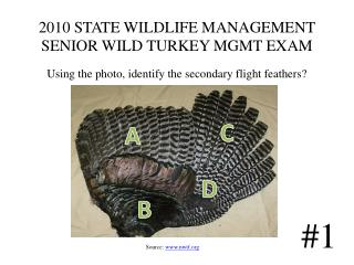 2010 STATE WILDLIFE MANAGEMENT  SENIOR WILD TURKEY MGMT EXAM