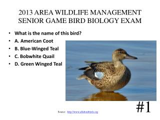 2013 AREA WILDLIFE MANAGEMENT SENIOR GAME BIRD BIOLOGY EXAM