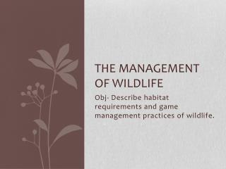 The management of wildlife