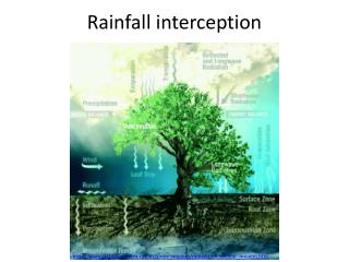 Rainfall interception