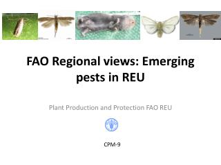 FAO Regional views: Emerging pests in REU
