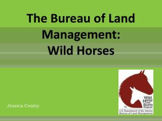 The Bureau of Land Management: Wild Horses