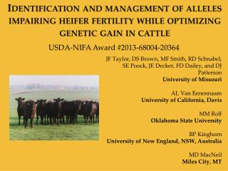 Identification and management of alleles impairing heifer fertility while optimizing genetic gain in cattle