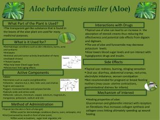 Aloe barbadensis miller  (Aloe)