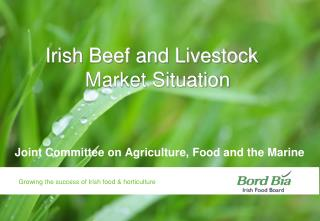 Irish Beef and Livestock Market Situation