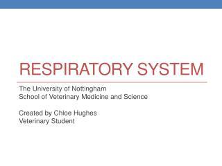 R espiratory System