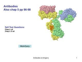 antibodies  antigens