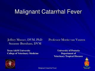 malignant catarrhal fever