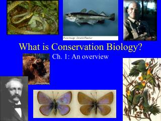 What is Conservation Biology?