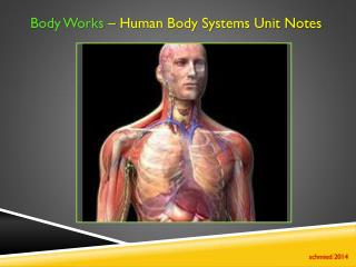 Body Works  � Human Body Systems Unit Notes