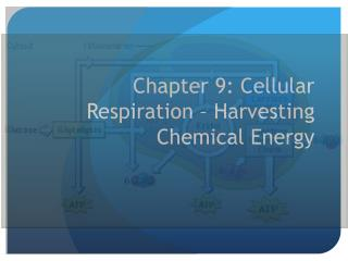 Chapter 9: Cellular Respiration – Harvesting Chemical Energy