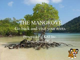 THE MANGROVE Go back and visit your roots.