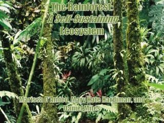 The Rainforest:  A  Self-Sustaining Ecosystem