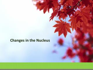 Changes in the Nucleus