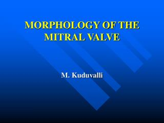 morphology of the mitral valve