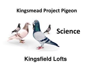 Kingsmead Project Pigeon