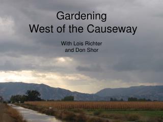 gardening  west of the causeway