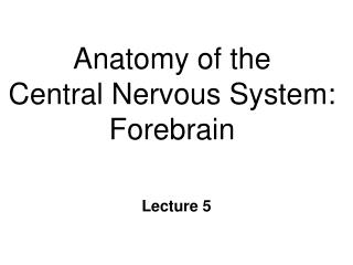 anatomy of the central nervous system: forebrain