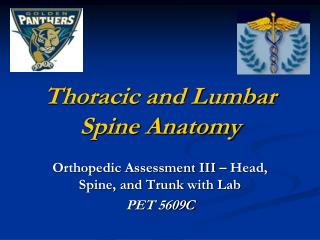thoracic and lumbar spine anatomy