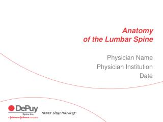 anatomy  of the lumbar spine
