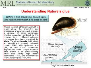 Understanding Nature's glue