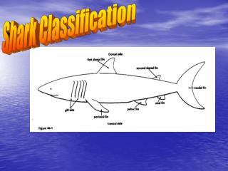 classification is the act of distributing things into classes or categories of the same type.