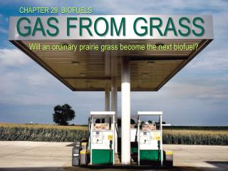 GAS FROM GRASS        Will an ordinary prairie grass become the next biofuel?