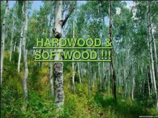 Hardwood & softwood HARDWOOD & SOFTWOOD !!!