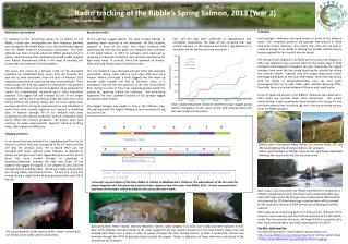 Radio tracking of the Ribble�s Spring Salmon, 2013 (Year 2)  By Gareth Jones