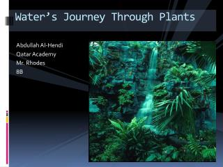 Water's Journey Through Plants