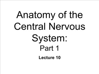 anatomy of the central nervous system: part 1