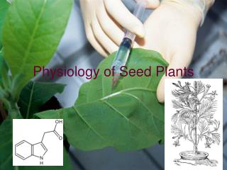 physiology of seed plants