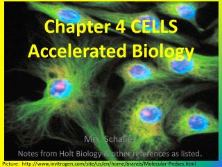 Chapter 4 CELLS Accelerated Biology