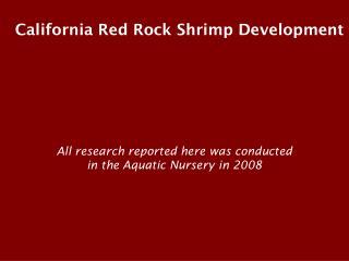 california red rock shrimp development
