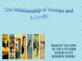 The Relationship of Human and Animals.