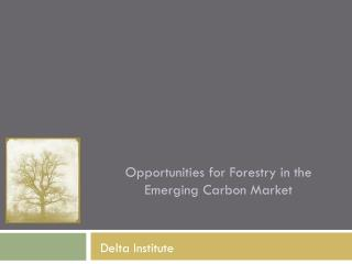 Opportunities for Forestry in the Emerging Carbon Market