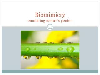 Biomimicry emulating nature's genius