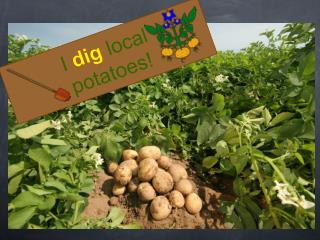 I dig local  potatoes!