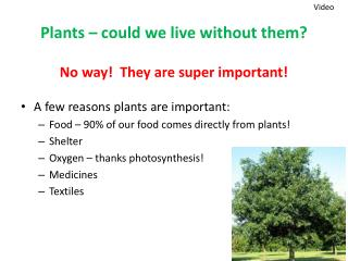 Plants – could we live without them?