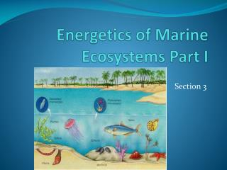 Energetics  of Marine Ecosystems Part I