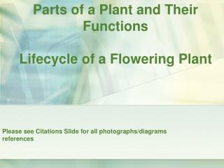 Parts of a Plant and Their Functions Lifecycle of a Flowering Plant