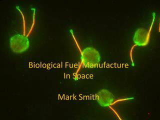 Biological Fuel Manufacture  In Space Mark Smith