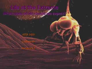 Life at the Extreme What types of life should we expect?