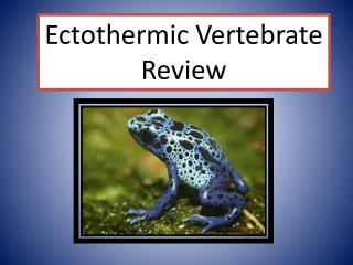 Ectothermic  Vertebrate Review