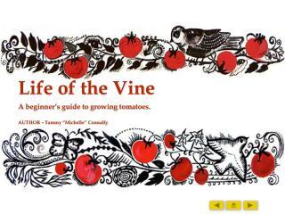 Life of the Vine